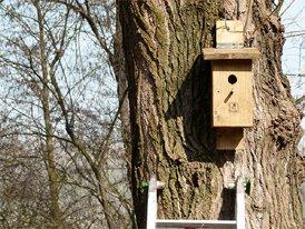 Posa di cassetta nido per uccelli